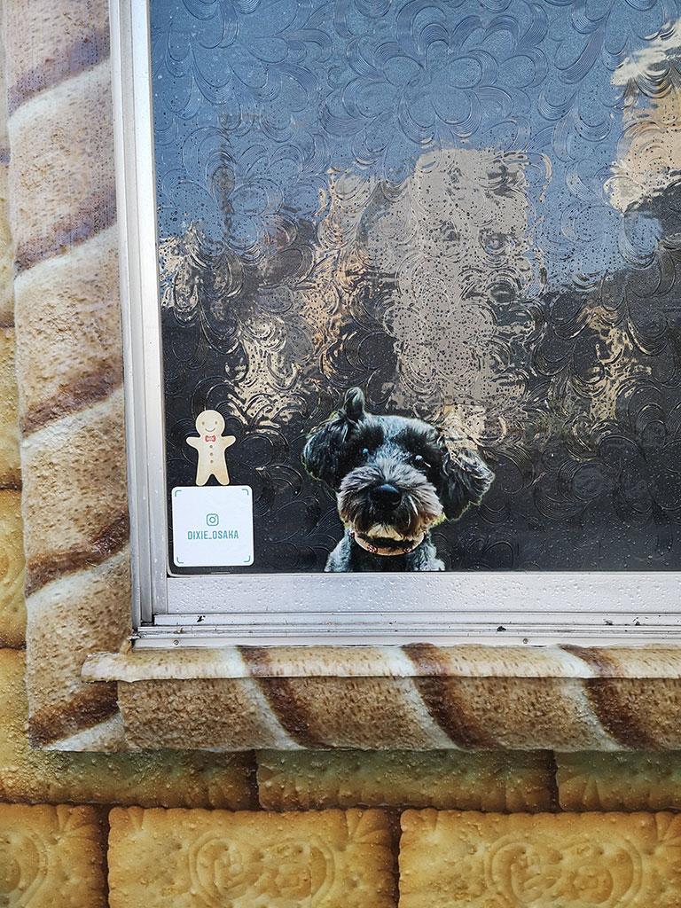 窓にひょっこり